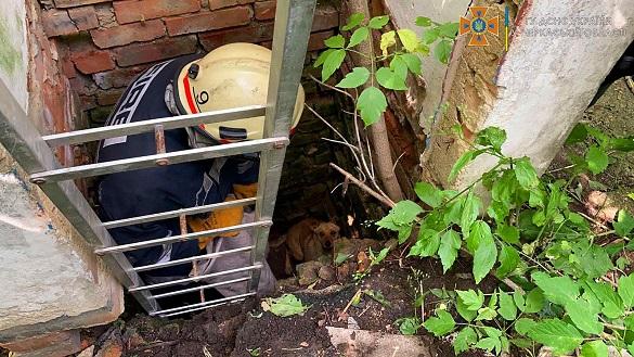 Із 2-метрової ями на Черкащині дістали собаку (ФОТО)