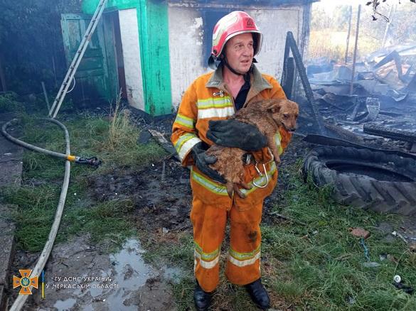 Із вогню в Черкаській області врятували собаку (ФОТО)