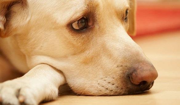 В Україні ухвалили закон про заборону знущання з тварин