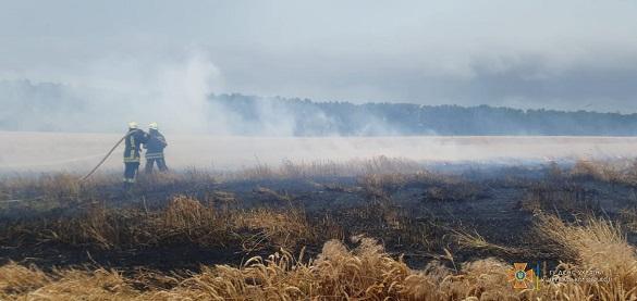 У Черкаській області сталася пожежі на полі з пшеницею (ФОТО)