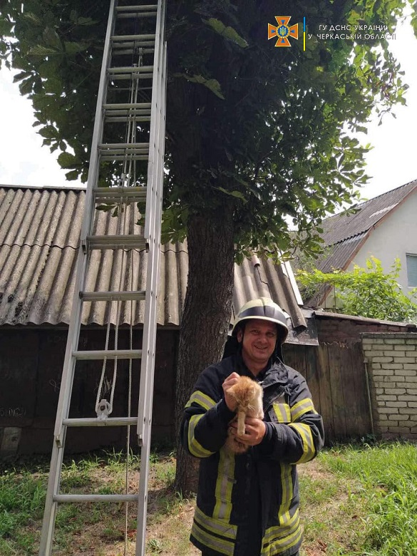 Черкаські рятувальники зняли з дерева кота (ФОТО)