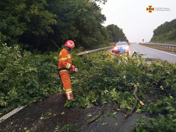У Черкаській області через сильний вітер впало понад 60 дерев (ФОТО)