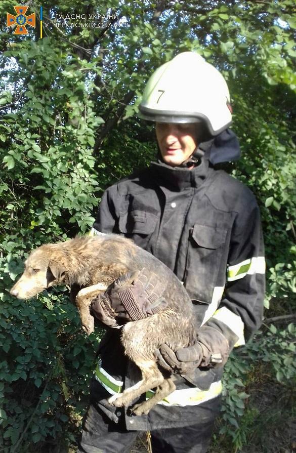 У Черкаській області врятували собаку, який впав до колодязя