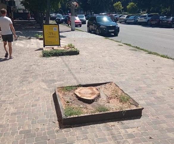 У міськраді пояснили, чому на Хрещатику в Черкасах спиляли три дерева