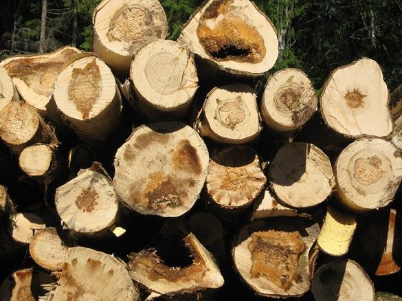 Збитки на понад 300 тисяч: у Черкаській області чоловік незаконно рубав дерева