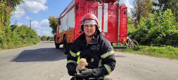 У Черкаській області з колодязя дістали маленьке цуценя (ФОТО)