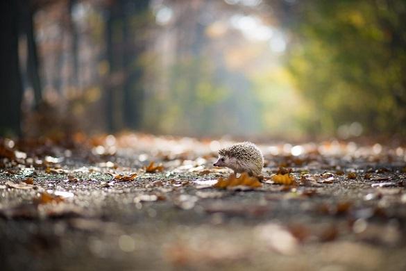 Завтра на Черкащині переважатиме осіння прохолода з невеликими опадами