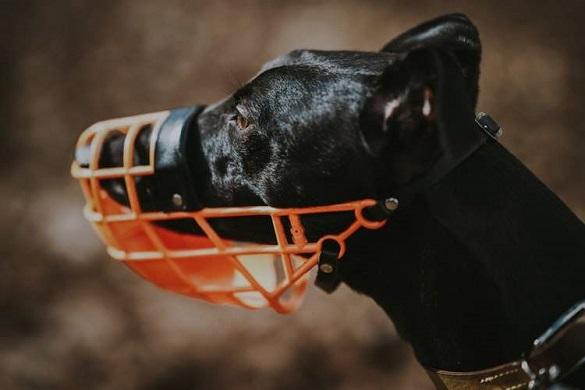 У Черкасах можуть заборонити вигулювати собаку без повідка та намордника