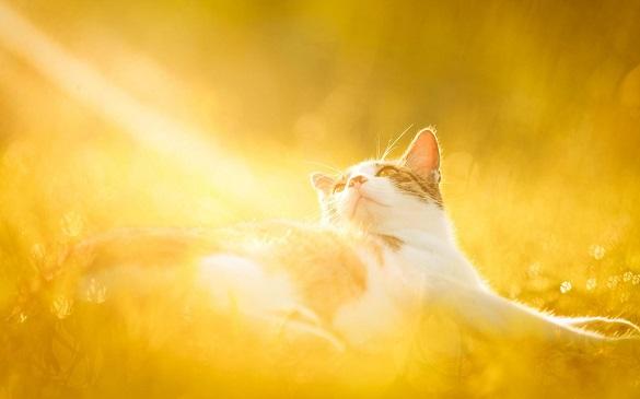 Найближчі чотири дні на Черкащині буде суха та сонячна погода (ВІДЕО)