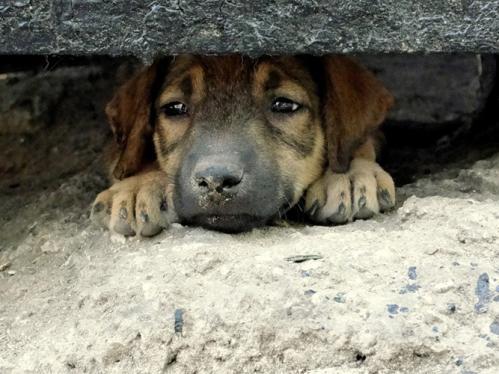 В Черкасах масово отруюють собак?