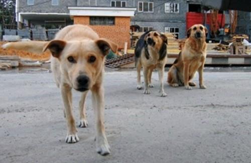 Чиновники із Черкас залишили собак голодними