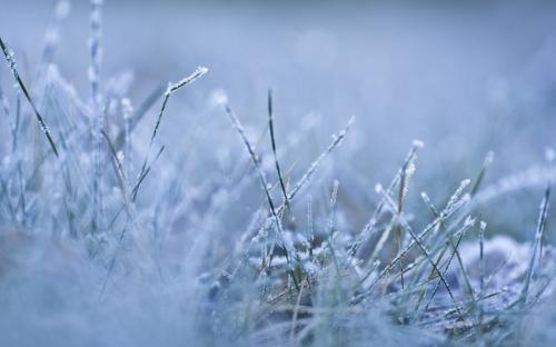 В Черкасах на морозі садили дерева