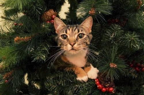 Краще із Youtube: Як коти люблять новорічні ялинки