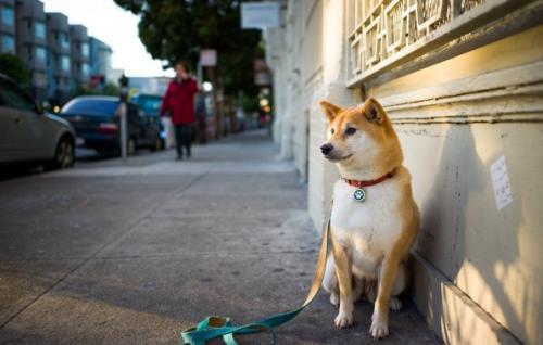 У Черкасах массово труять собак?