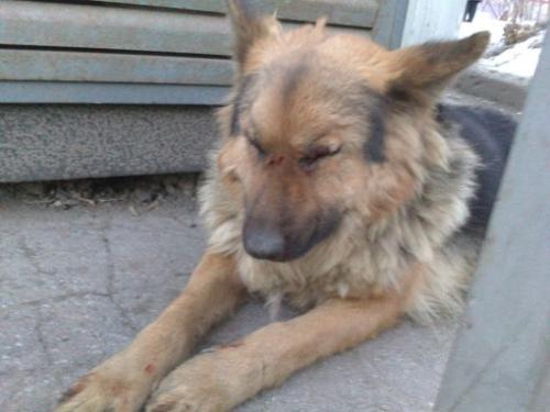 Черкащанин спеціально морив голодом собаку, щоб її не вигулювати