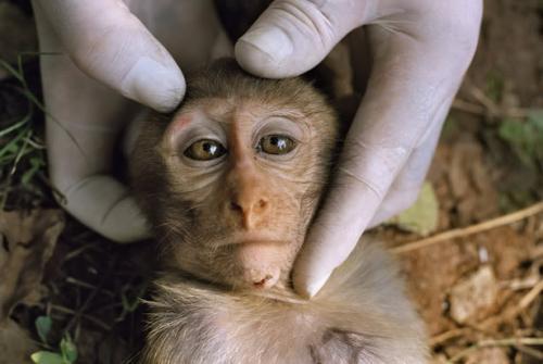 Відвідувачі вбивають тварин Черкаського зоопарку