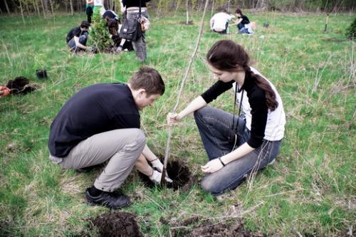 У Черкасах одне дерево буде коштувати понад тисячу гривень?