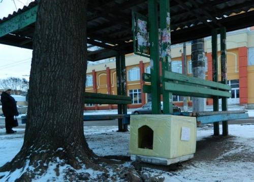 Черкащани власними руками створили дім для бездомної собаки