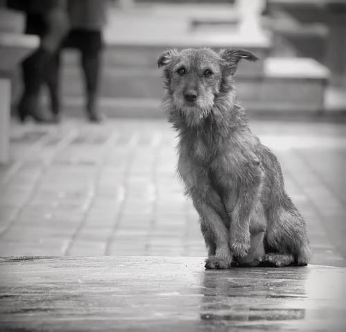 У Черкасах масово труять собак