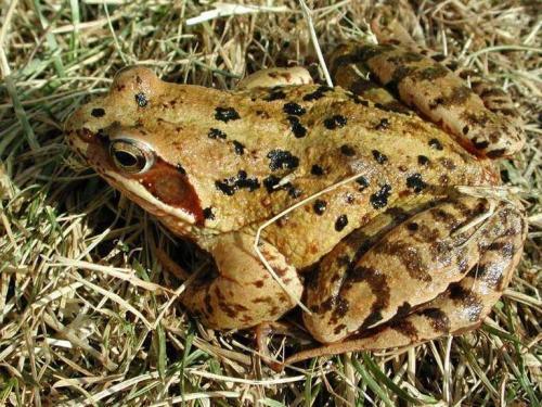 У Черкаському зоопарку жаби прийняли зиму за весну (ВІДЕО)
