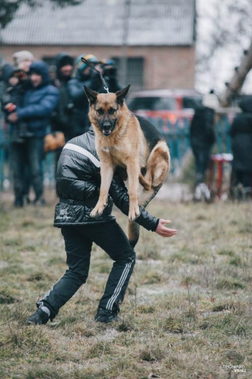 На один день черкаські собаки стали фотомоделями