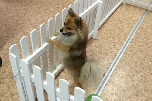 У Черкасах існує готель для тварин