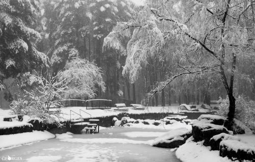 Зимова феєрія у парку