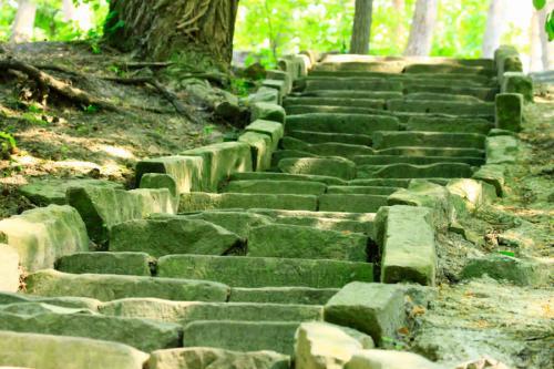 У Соснівському парку незаконно вирубують дерева