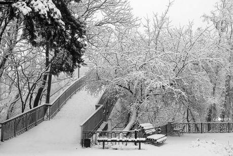 Казкові краєвиди засніженого парку в Черкасах (ФОТО)