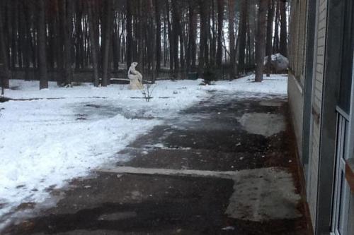 Під вікна міського голови Черкас кинули вибухівку (ФОТО)