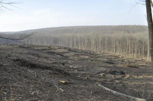 У Холодному Яру знищують ліс?