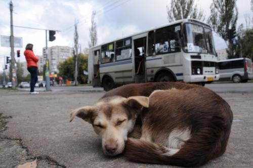 Місто два роки не виділяє кошти на утримання безпритульних тварин
