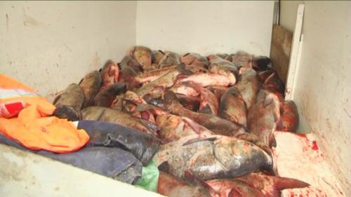 Міліція спіймала браконьєрів, які перевозили півтори тони риби (ВІДЕО)