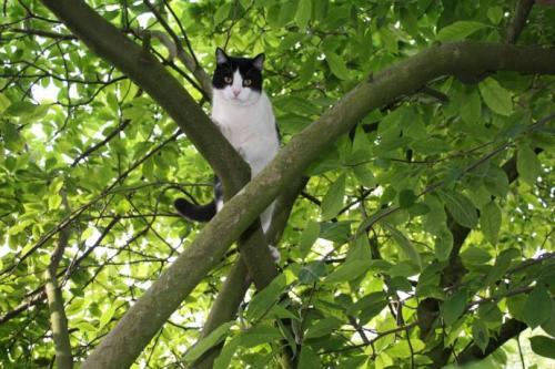 Через байдужість комунальників кіт три доби просидів на дереві (ВІДЕО)