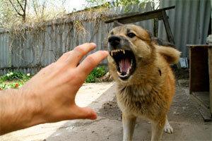 Родина із двома дітьми живе у постійному страху через сусідських собак (ВІДЕО)