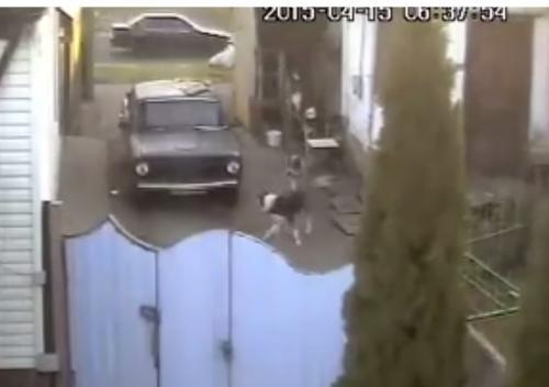 Власники собаки, що ледь не вбили черкащанку, заплатять мізерний штраф