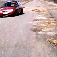 Золотоніські комунальники залатали дорогу цеглою (ВІДЕО)
