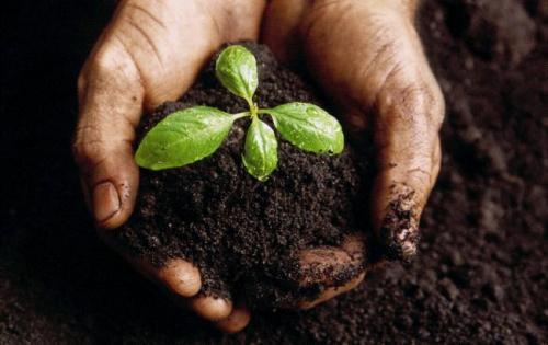 На Черкащині у селян відбирають землю