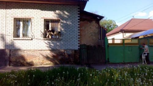 У власників розплідника алабаїв вилучать собак і знову демонтують паркан