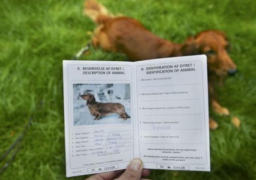 В обласному центрі можуть ввести обов'язкову реєстрацію собак
