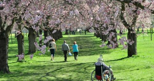 """У Черкасах облаштують парк для """"особливих"""" людей"""
