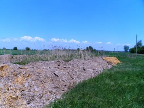 У Мошнах знайшли тони мертвої птиці