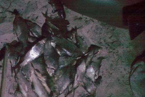 Біля Дніпра на гарячому спіймали двох браконьєрів