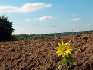 Через бюрократію АТОвець півроку не може отримати землю