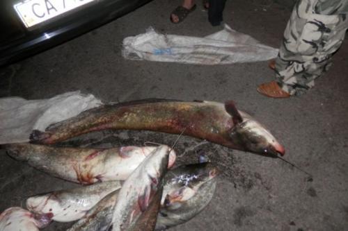 Браконьєр виловив риби на 6 тисяч гривень