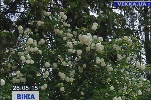 Через гроші у Черкасах може зникнути унікальний сад