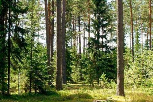 У Соснівському парку збудували бомбосховище з вигрібною ямою