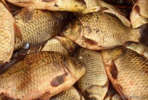 На Черкащині розпочали промисловий вилов риби