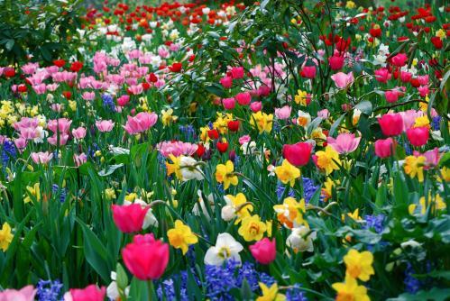 Черкащанка стала квітковою феєю (ВІДЕО)