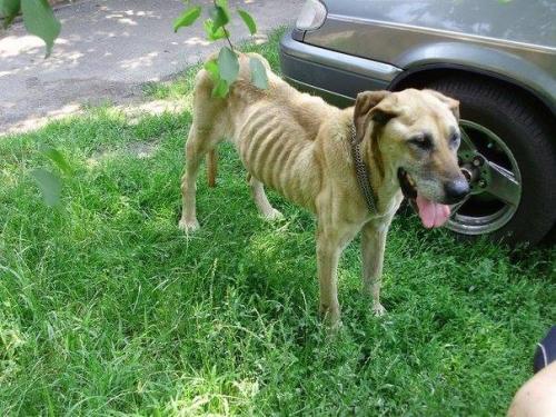 Черкащан просять допомогти врятувати замореного голодом собаку (ФОТО)